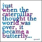 Magnet Caterpillar